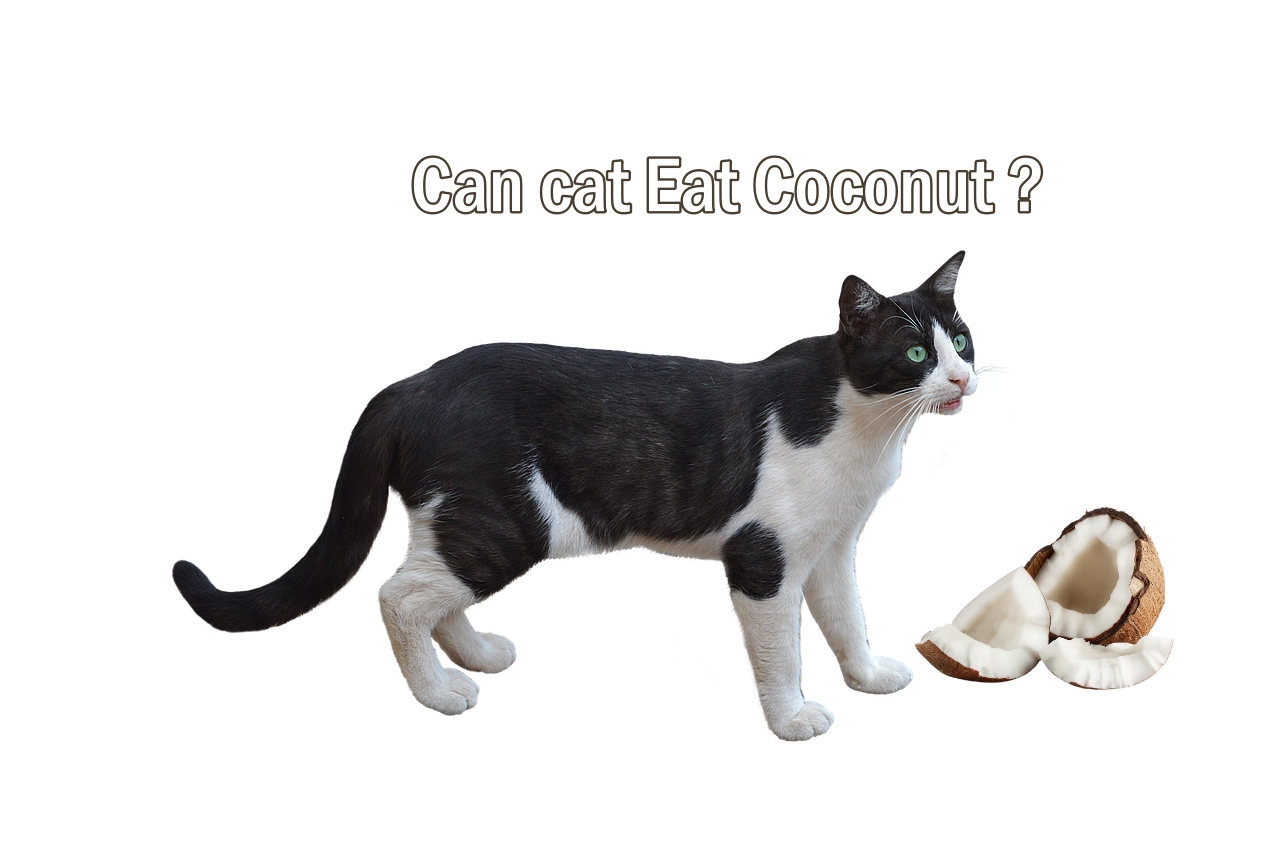Can cat eat coconut