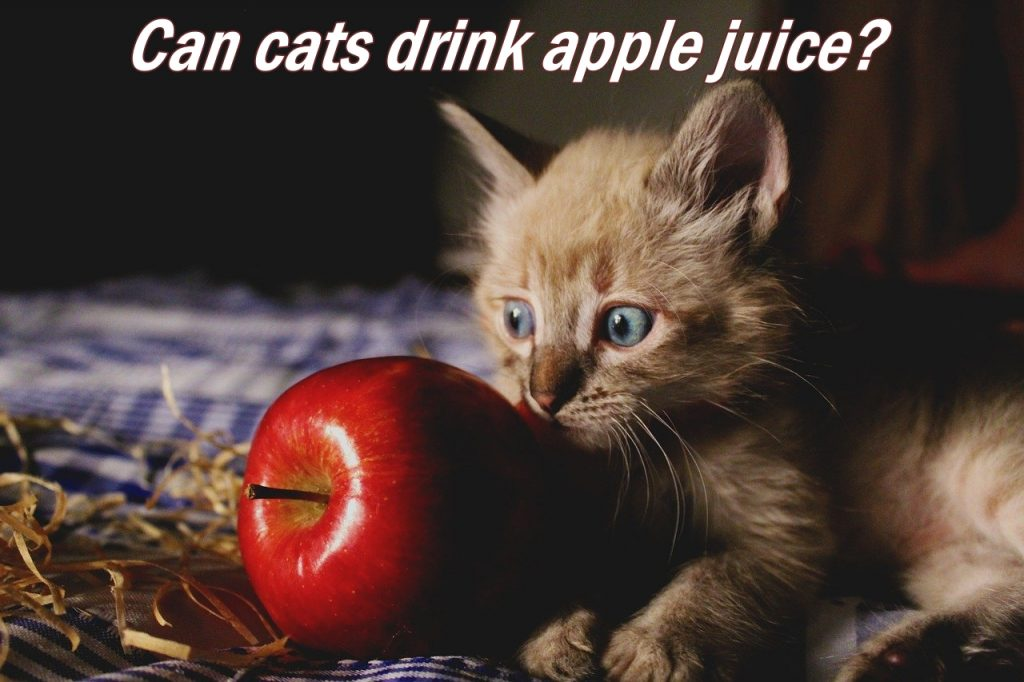 Can cats drink apple juice