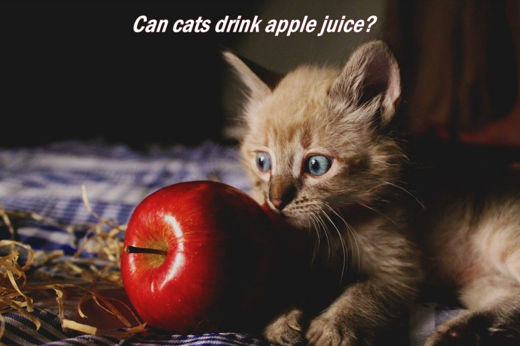 Can cats drink apple juice 2