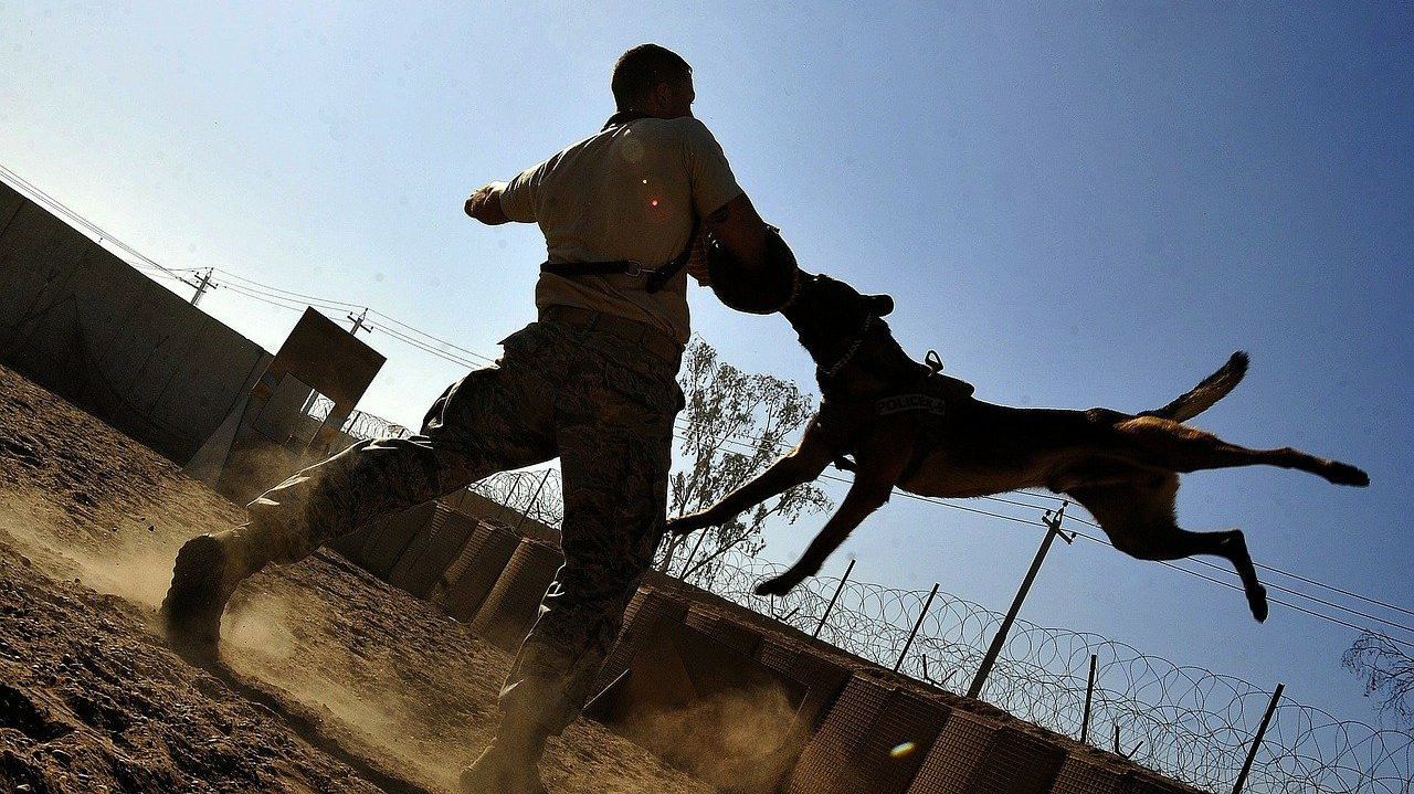 Top 3 protection dog training facilities