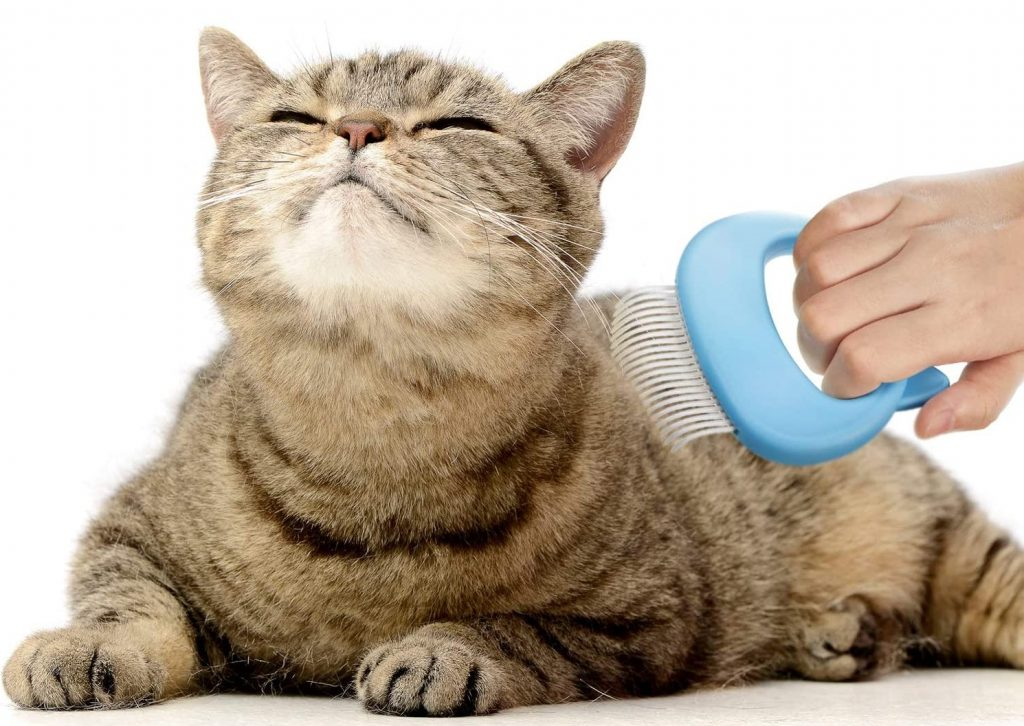 how often should you brush your cat