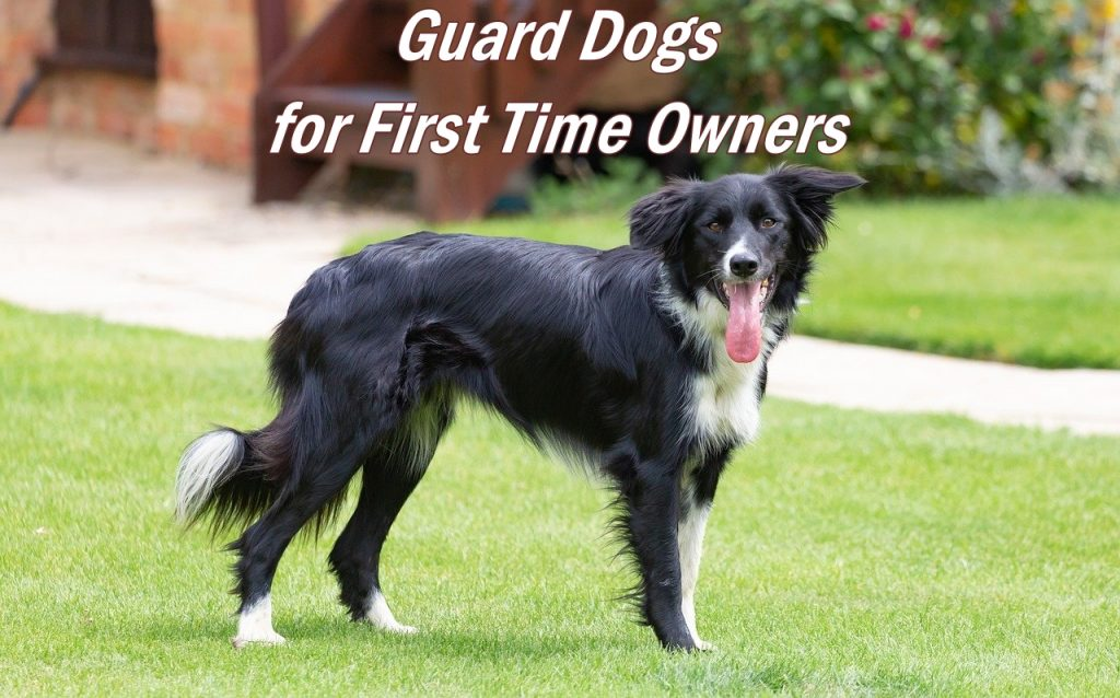 guard dogs for first time owner