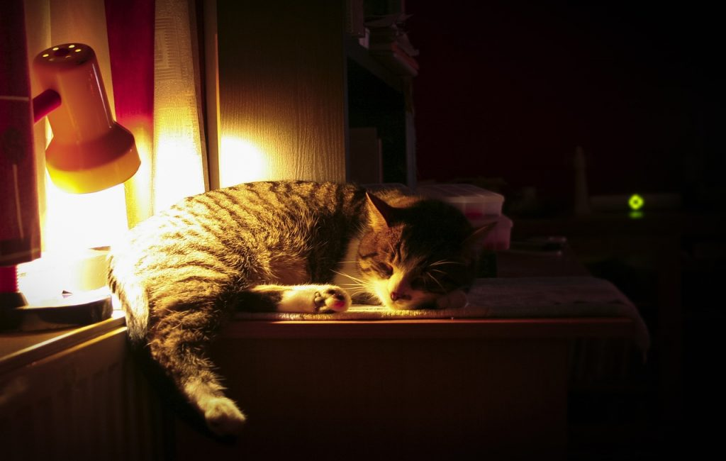 Should I leave a light on for my kitten at night