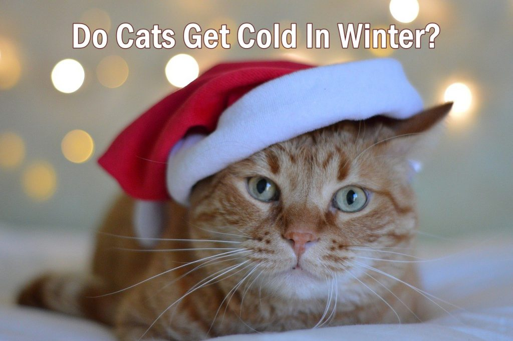 Do Cats get cold In Winter