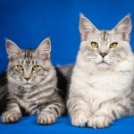 Best Cats for First Time Owners