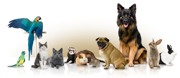 guide to become the best pet owner