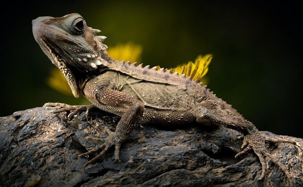 Reptiles pet