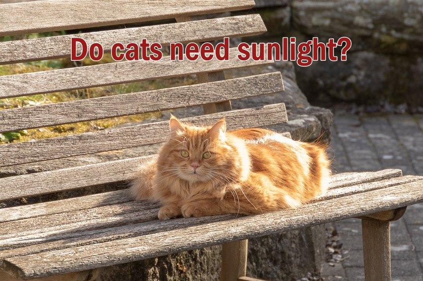 Do cats need sunlight