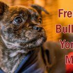 french bulldog yorkie mix